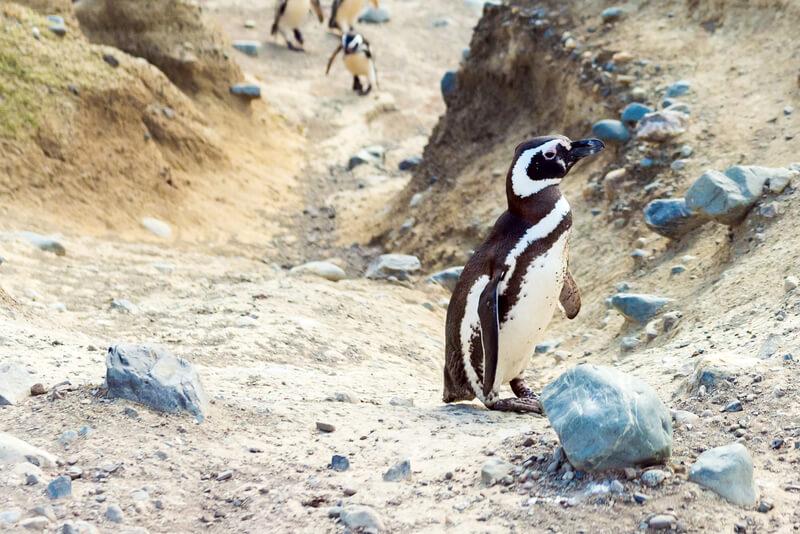 bijzondere bezienswaardigheden patagonie