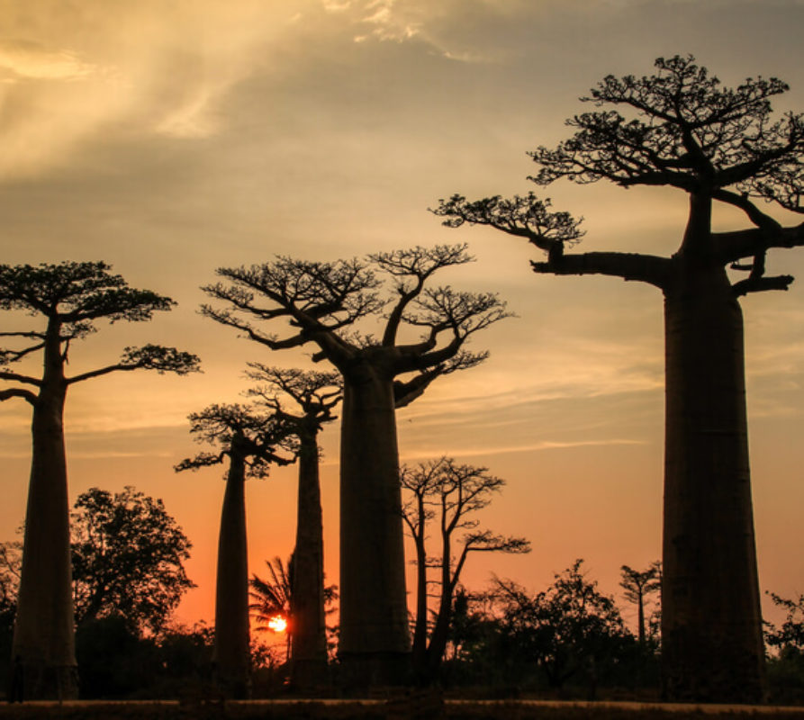 Rondreizen in Madagaskar, wat zijn de hoogtepunten?