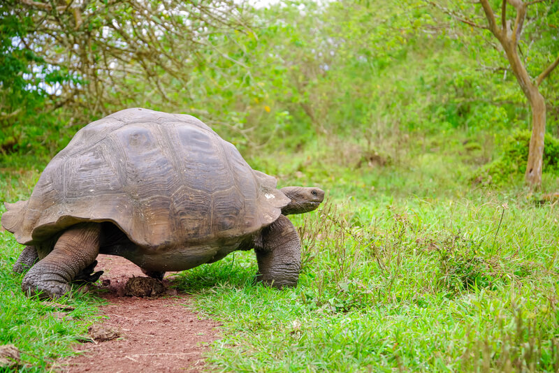 bezienswaardigheden galapagos eilanden