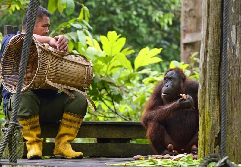 Een rondreis maken op Borneo