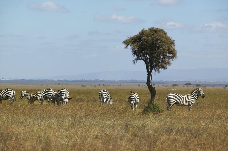 Kenia bezienswaardigheden