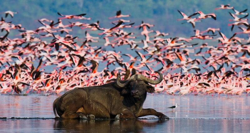 hoogtepunten Kenia